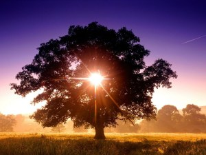 tree-of-lifelight2