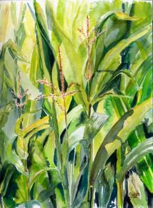 summer-corn-web