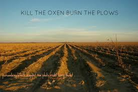 kill oxen
